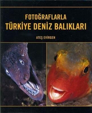 FOTOĞRAFLARLA TÜRKİYE DENİZ BALIKLARI